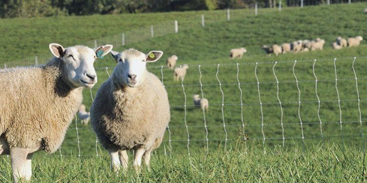 Good Fences Make Good Neighbors (And Help Limit Liability)